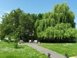 Jardin (Bâtiment B)